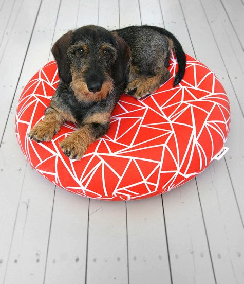 Wire Haired Dachshund My New Doggy Love Dog Milk Dog Bed Little Dogs