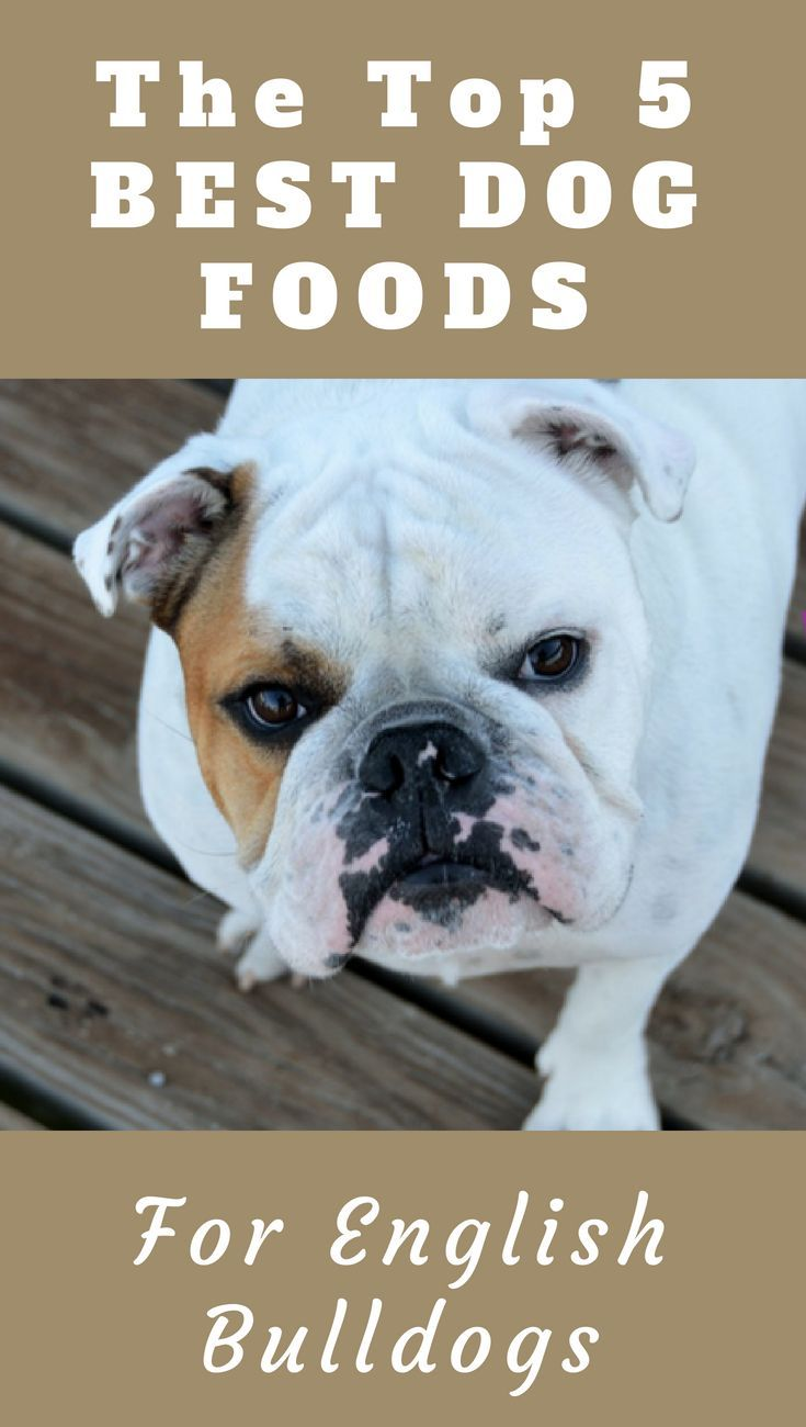 Top 5 Best Dog Food For English Bulldogs You Never Knew Dog