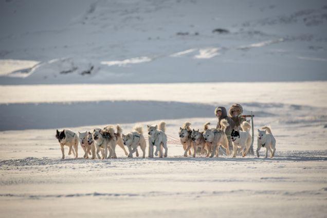 Grónsko psie záprahy 3 - Discover the World of Greenland Top 6 arktických atrakcie - Svet cestovať