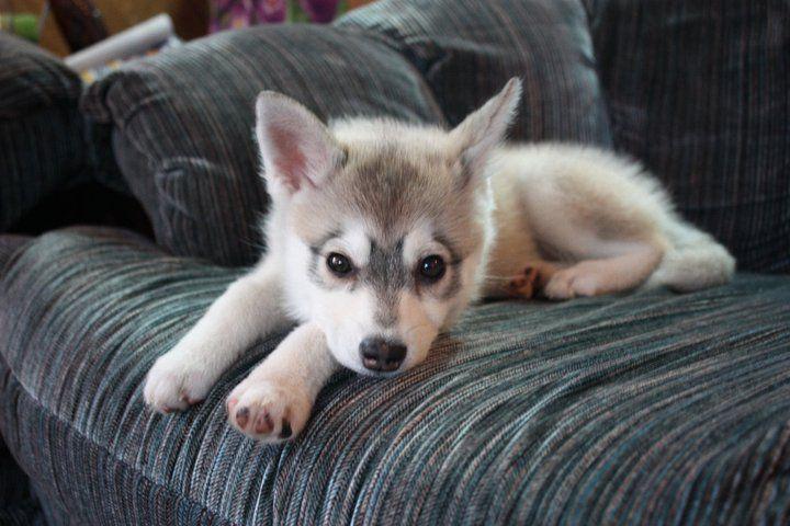 Puppy♥♥♥ ♦dAǸ†㉫♦