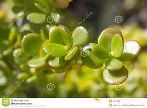 Succulent Flowers - - Yahoo Image Search Results