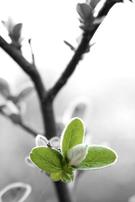 Photo noir et blanc avec une partie en couleur photofiltre — 1