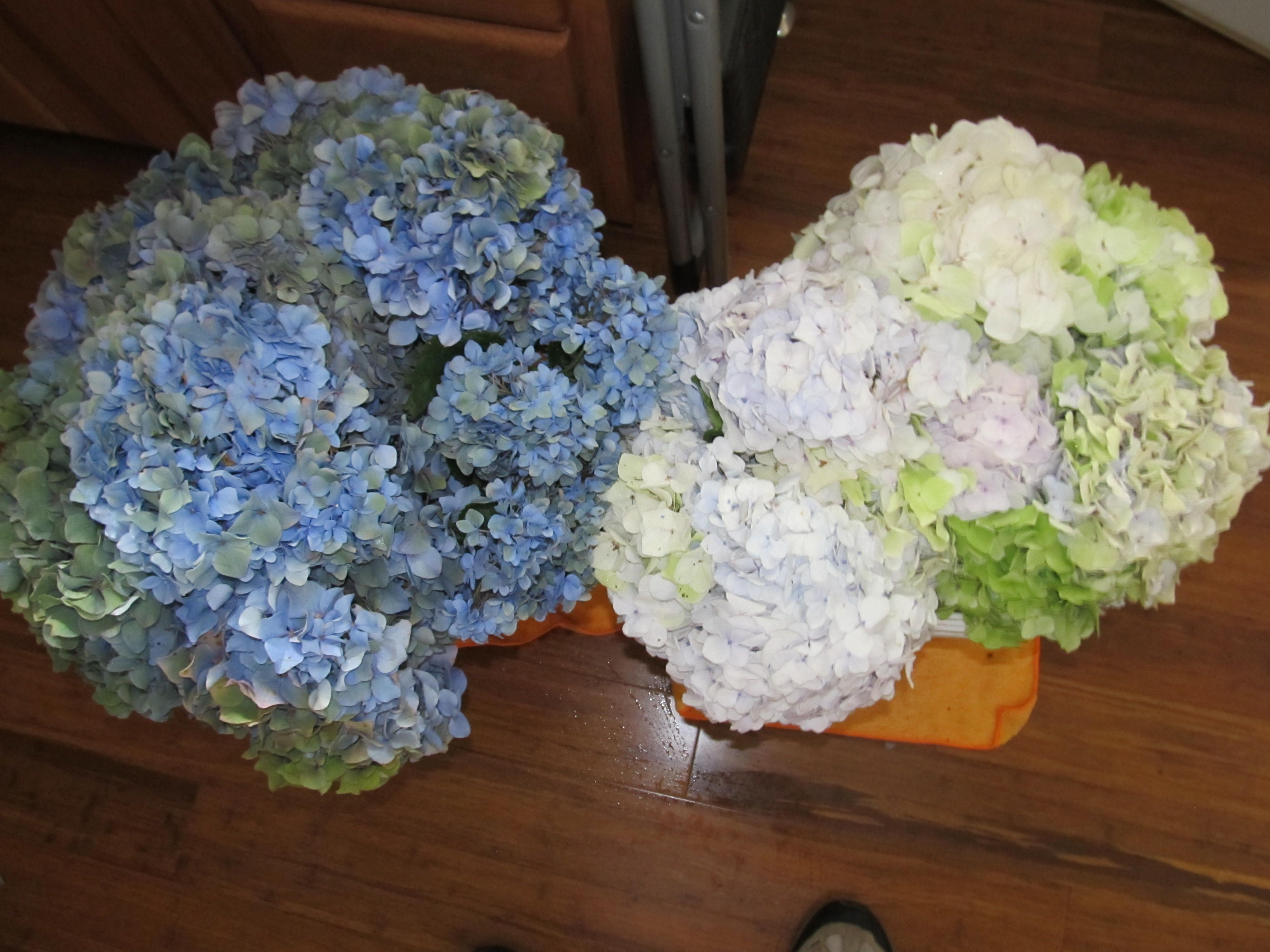 SUCCESS !!!   Shipped our hydrangea to Farmington New Mexico in this Heat !!  Alice's Testimonial...Jim,   Just wanted you to know the flowers were delivered in great shape, they are gorgeous.!!  Ck out our website...www.weddinghydrangea.com