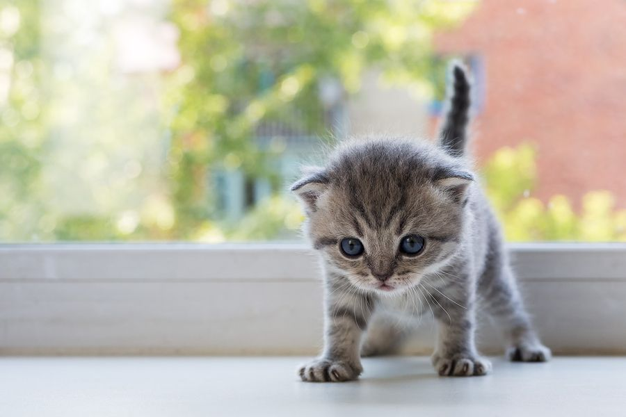 In The Bad Old Days Veterinarians Offered Zero Advice For A Client Who Was Getting A New Kitten Or Cat Here S What Norm Pet Calming Cats Knead Kittens Cutest
