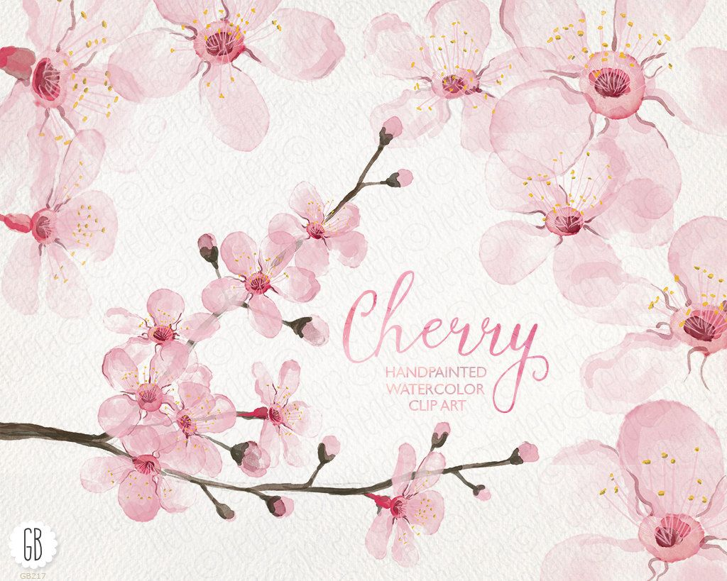 Watercolor cherry blossom cherry tree sakura hand painted spring ...