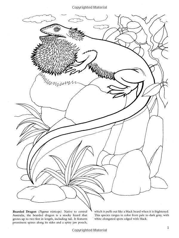 lizards coloring book dover nature