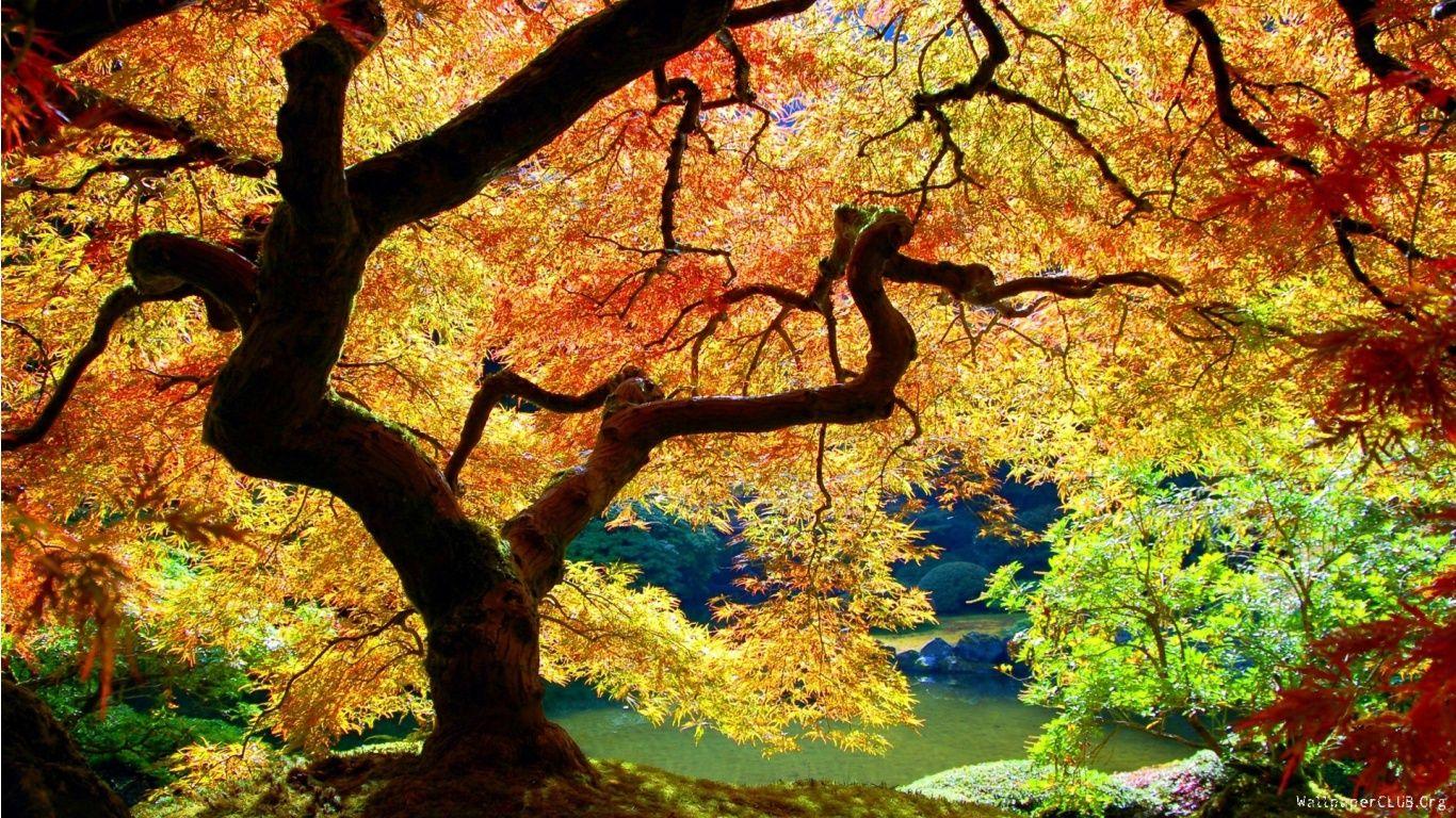 White Oak Trees In Autumn