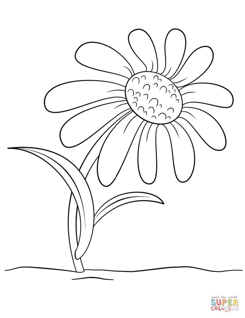 Cartoon Daisy Flower | Super Coloring | Kwiat | Pinterest