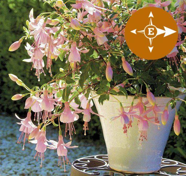 Rosliny Na Balkon Wschodni Plants Garden Shadow
