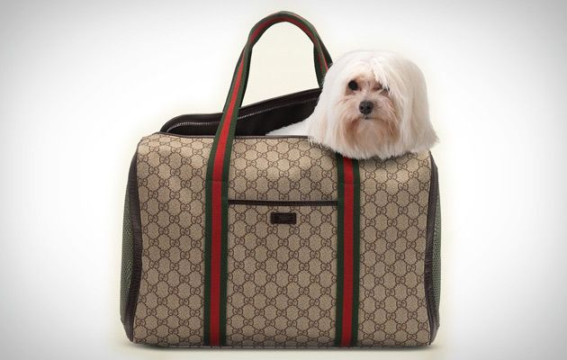 db78c5d42 Gucci Dog Bag - Luxury Designer Dog Carrier - Modern and Contemporary Pet  Products Updated Daily - CoolPetProducts.com