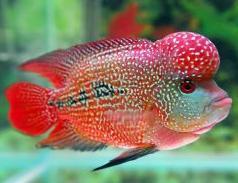 Buy Fish Online