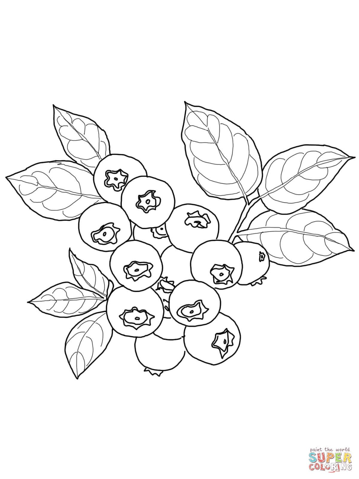 Blueberry Coloring Page From Blueberry Category Select From 26977 Printable Crafts Of Cartoons Nature Fruit Coloring Pages Coloring Pages Embroidery Patterns