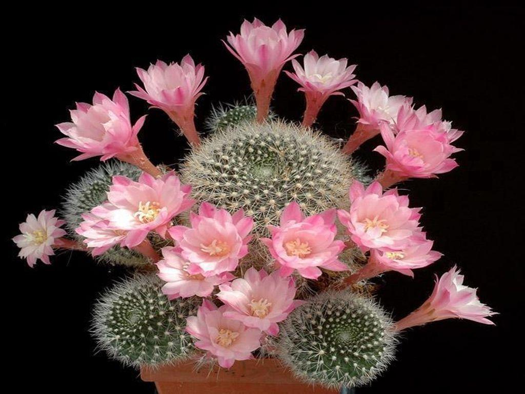 Poemas e encantos i julho 2014 cactus diferentes - Como transplantar cactus ...