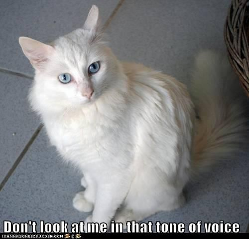 Don T Look At Me In That Tone Of Voice Silly Cats Animal Antics