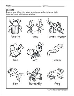 Insects identification preschool sheet teaching for Insect coloring pages preschool