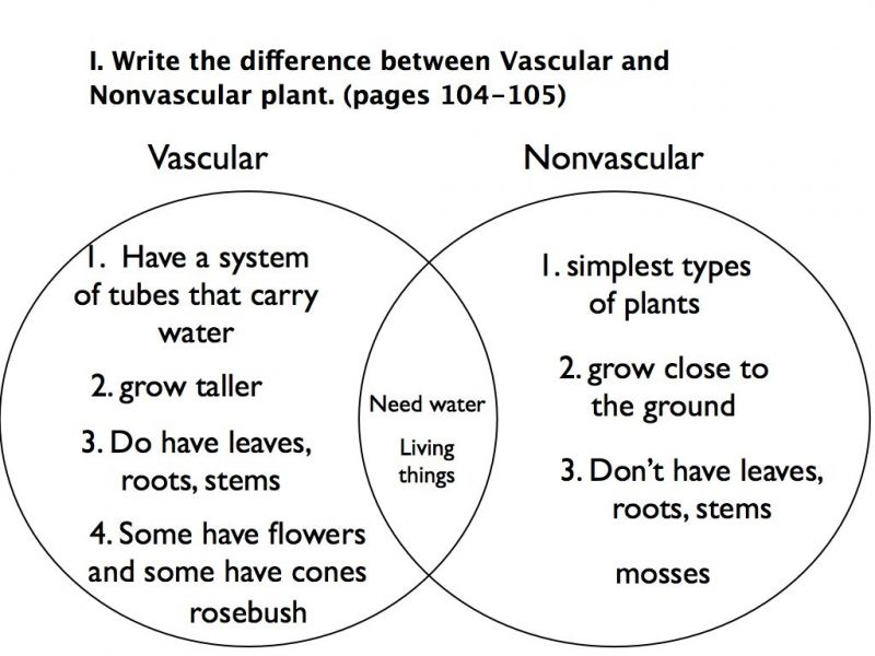 Cell that can grow into a new plant when the conditions are right – Vascular and Nonvascular Plants Worksheet