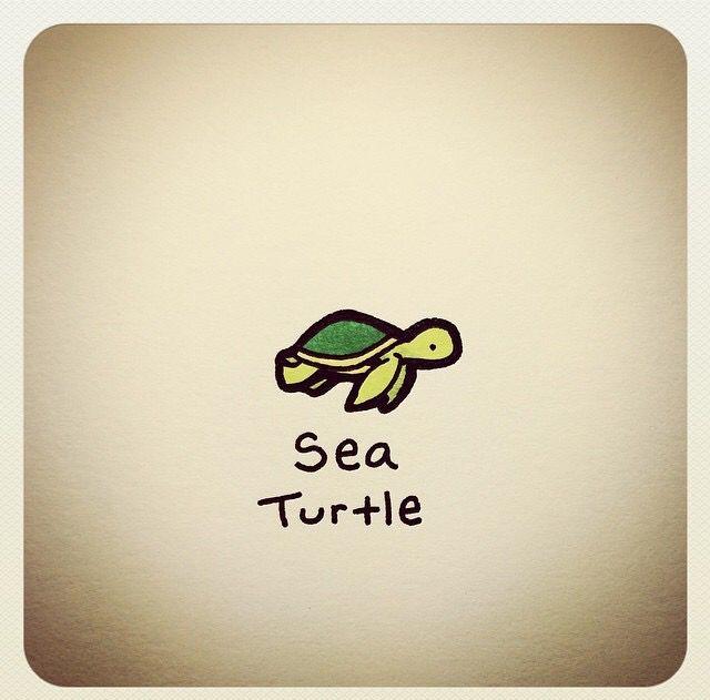 Turtlewayne Turtle Drawing Cute Turtle Drawings Turtle Sketch