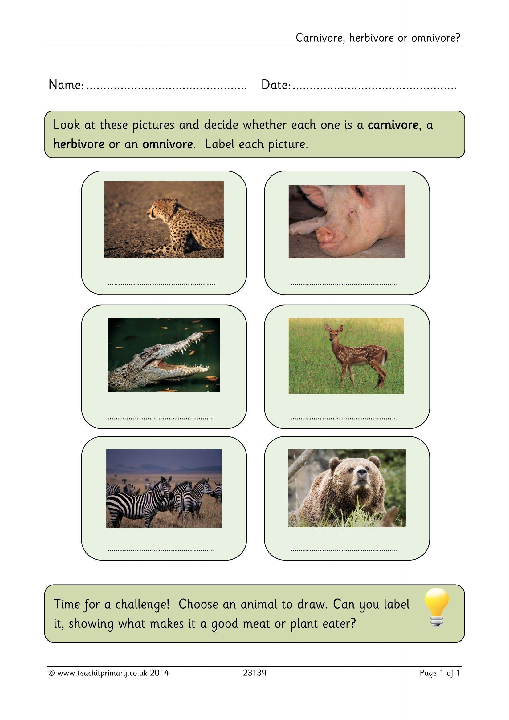 Carnivore Herbivore Or Omnivore
