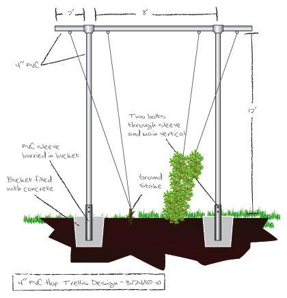 Trellis Plans For Growing Hops Gardening Hops Trellis