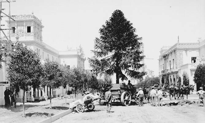 Large tree being moved along the Prado in Balboa Park