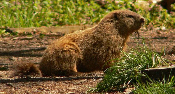 Of candles and groundhogs