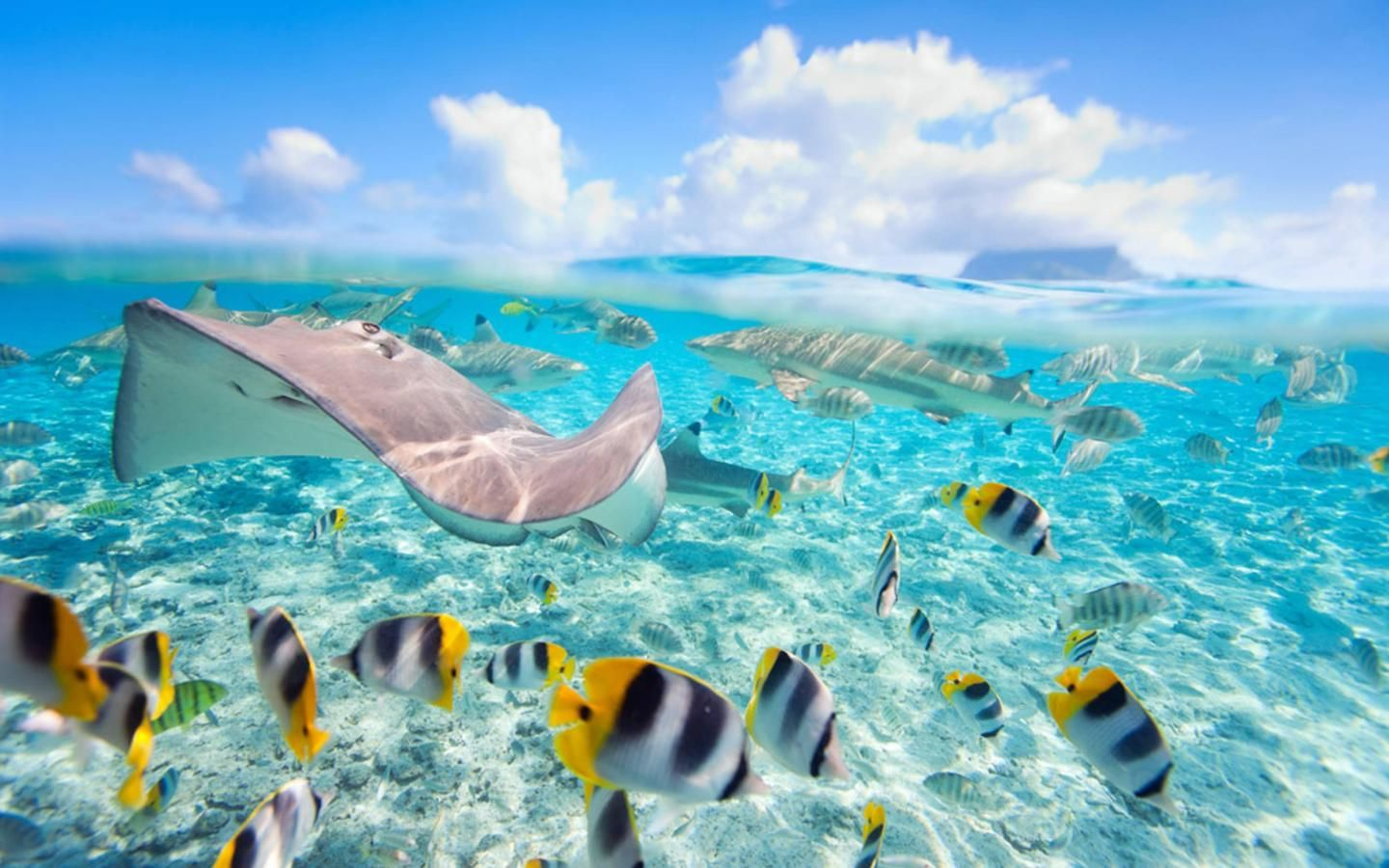 underwater fish in bora bora HD Wallpaper | Underwater wallpaper, Tahiti  french polynesia, Tropical fish pictures