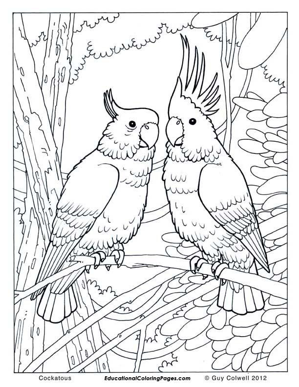 59. Free jungle bird coloring pages for adults - Cockatoo coloring ...