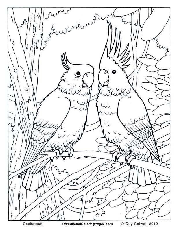 Cockatou Jpg 612 792 Pixels Bird Coloring Pages Jungle Coloring Pages Animal Coloring Pages