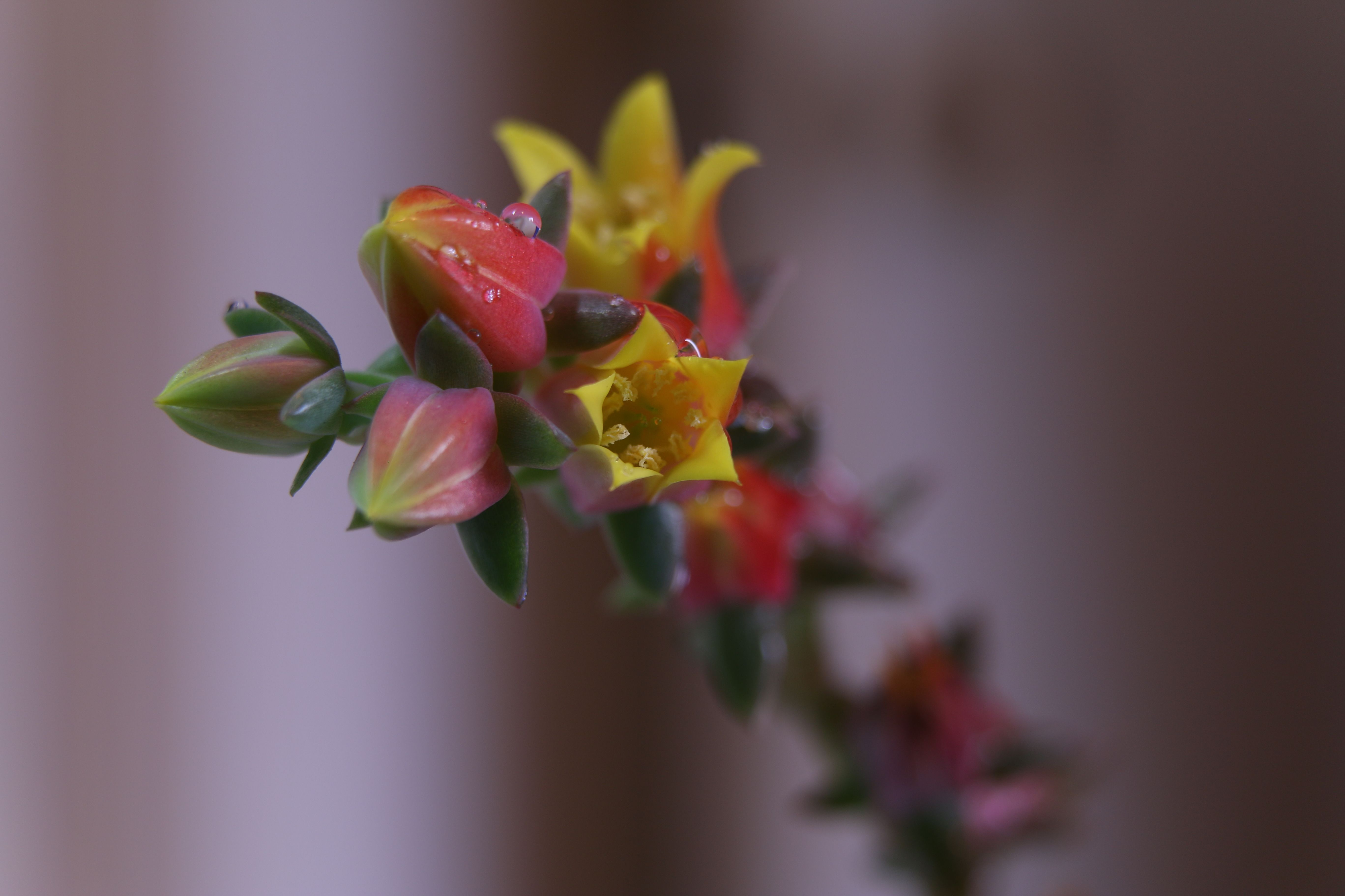 Here is the only photo for today a beautiful flowering succulent plant in the California rain. Here is a print of this flower: http://www.zazzle.com/yellow_orange_succulent_flower_canvas_print-192846402717972621