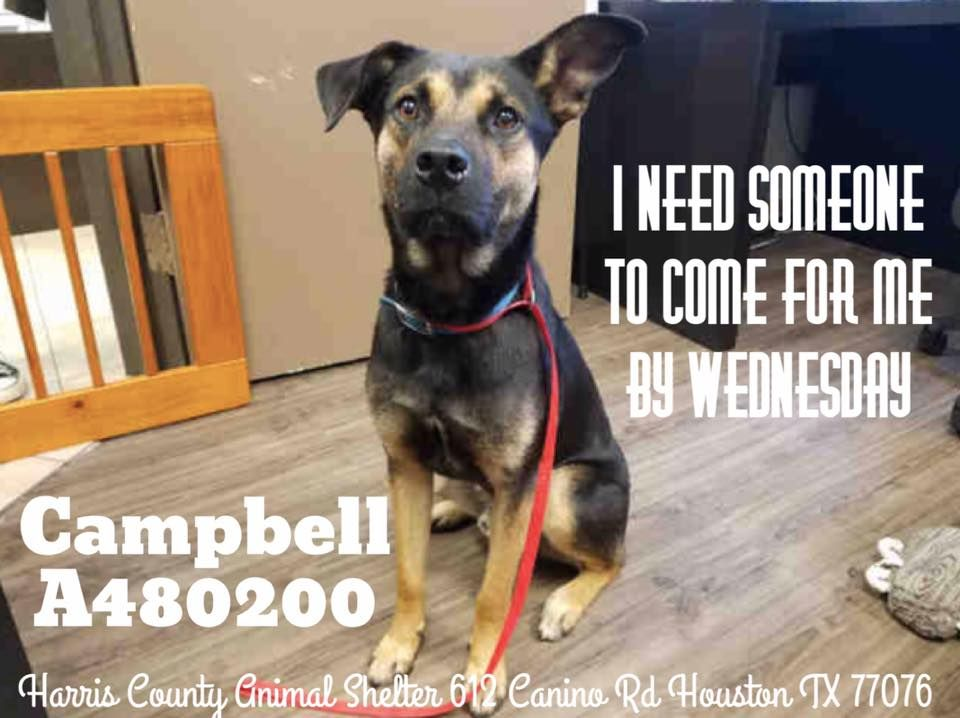 Dies Wed 03 29 17 Extremely Urgent Houston Everyone Meet Campbell The Shelter Staff Love This Guy And Need Our Help Dog Adoption Animal Rescue Animals
