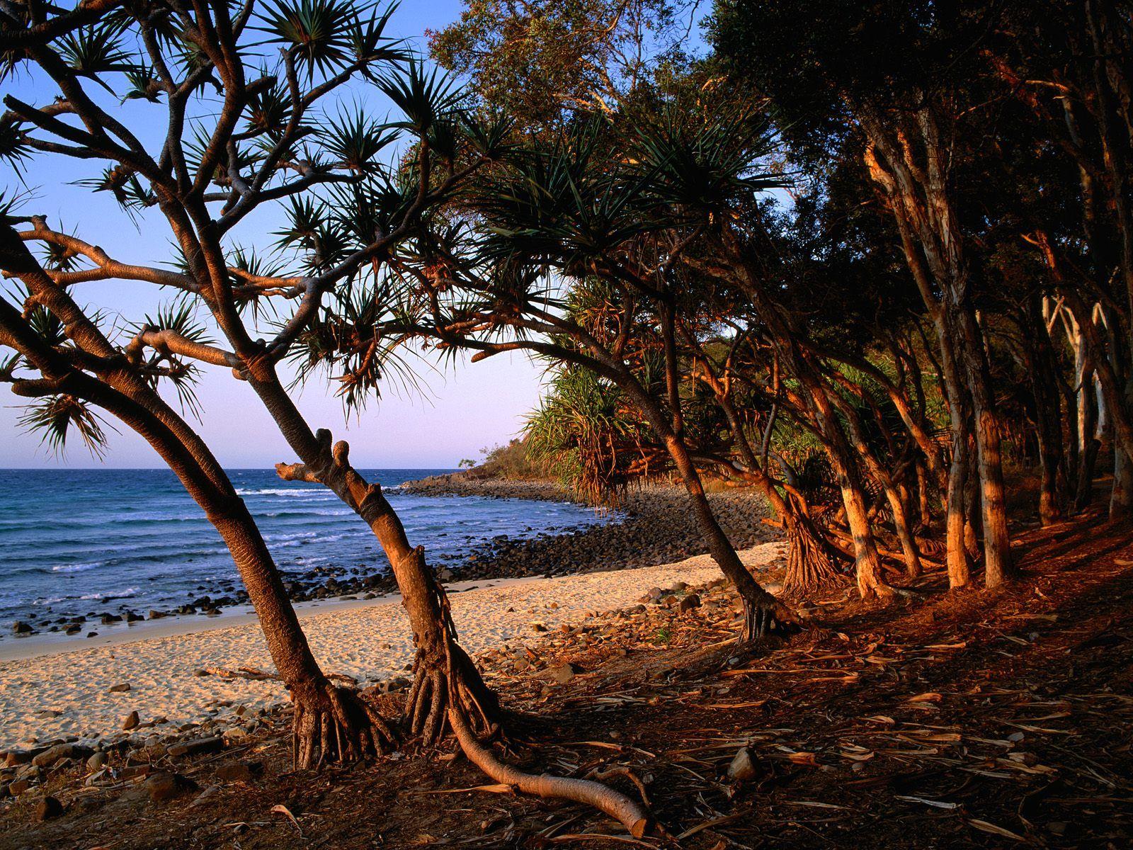 Tea Tree Beach Noosa National Park Queensland Australia Wallpaper