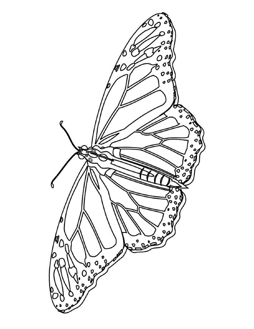 Monarch Butterfly Coloring Page Youngandtae Com Butterfly Printable Butterfly Coloring Page Free Coloring Pages [ 1056 x 816 Pixel ]