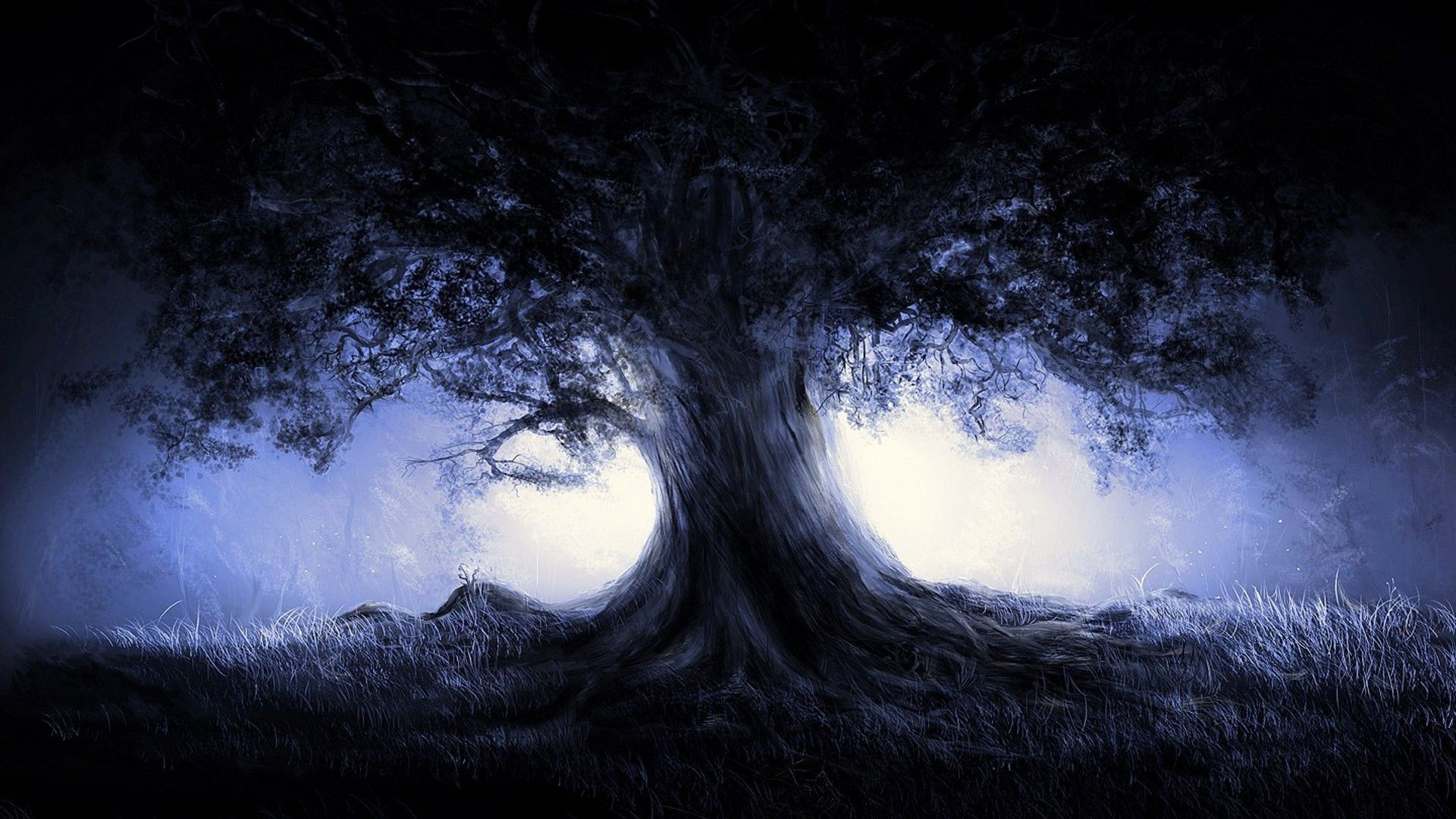 Dark Trees Hd Wallpapers: Dark Forest Wallpaper 1080p