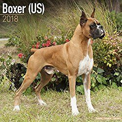 Adopt Bruce on Pitbull terrier, Boxer puppies, Poor dog