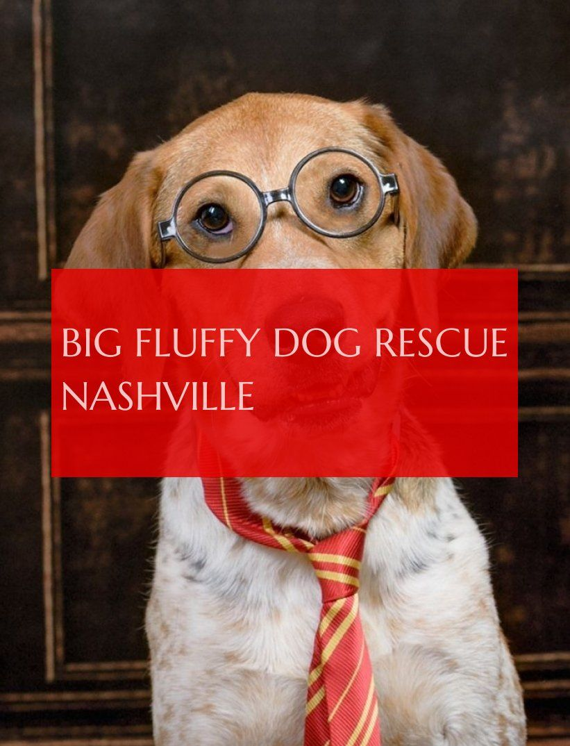 big fluffy dog rescue nashville große flauschige