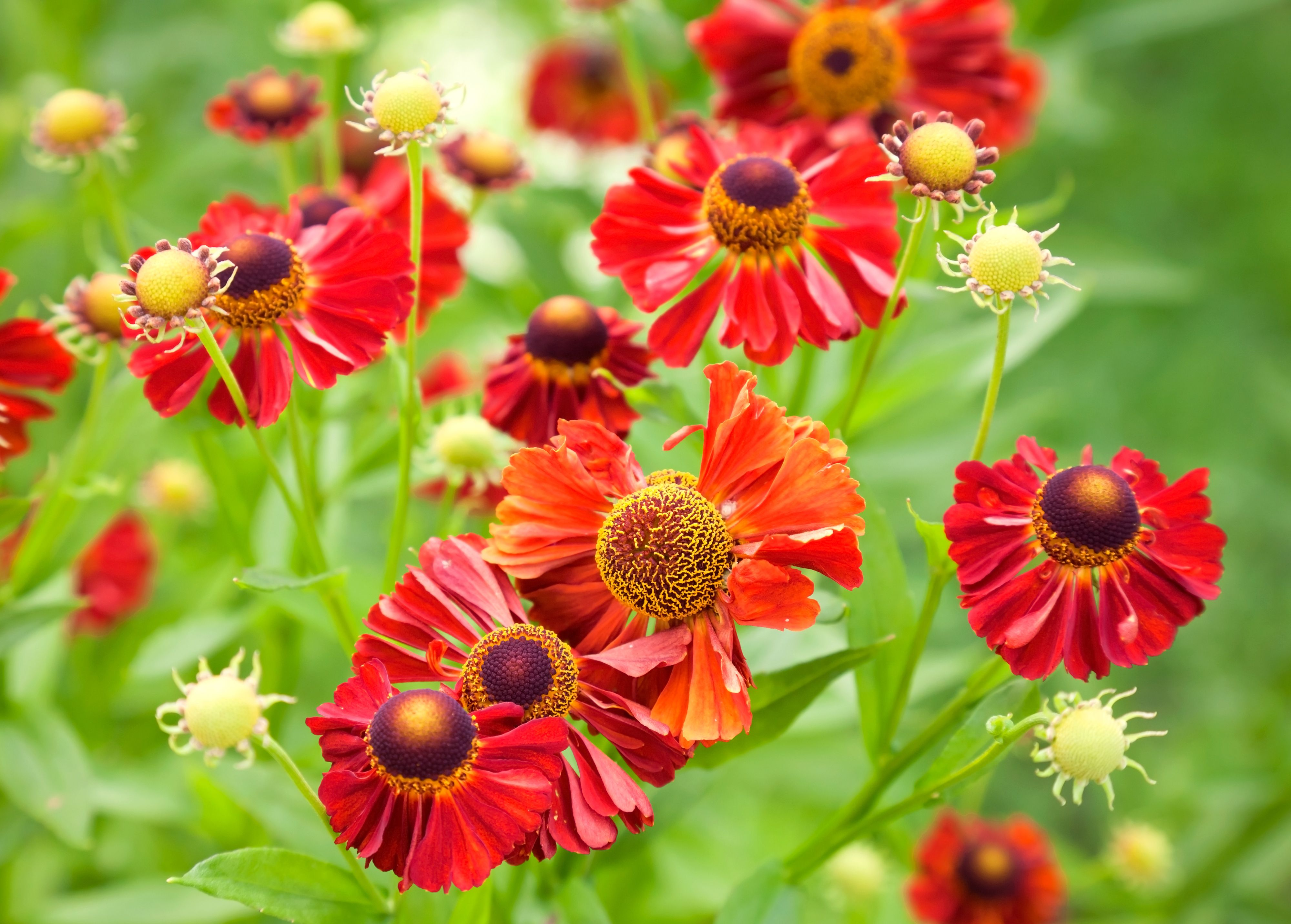 Top Gardening Tips For Coping With Clay Soil Read This Essential