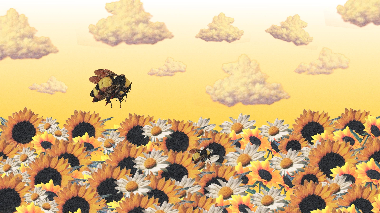 Res 2880x1620 Yellow Bee Wallpaper Desktop Wallpaper Art Tyler The Creator Wallpaper Aesthetic Desktop Wallpaper
