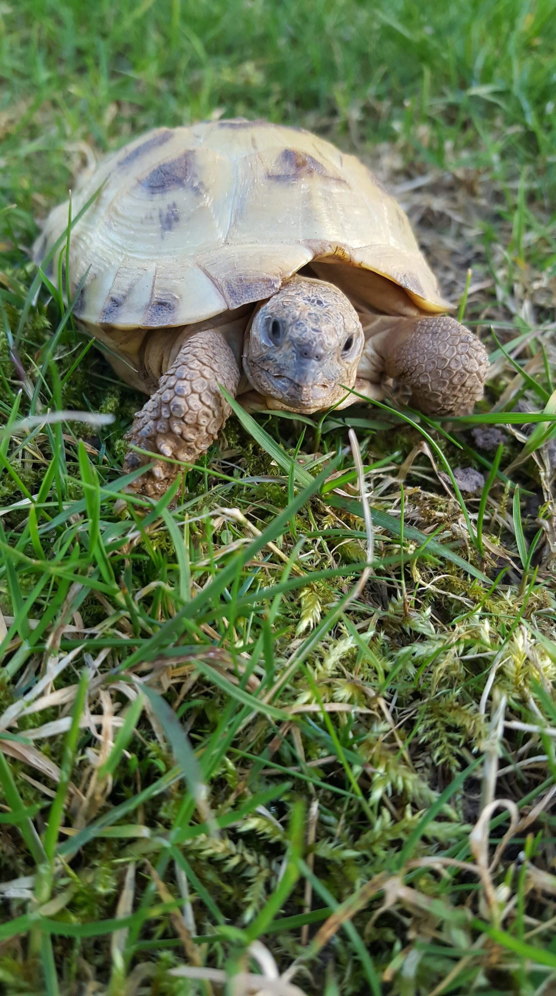 Since you all seemed to like my little tortoise here he is ...