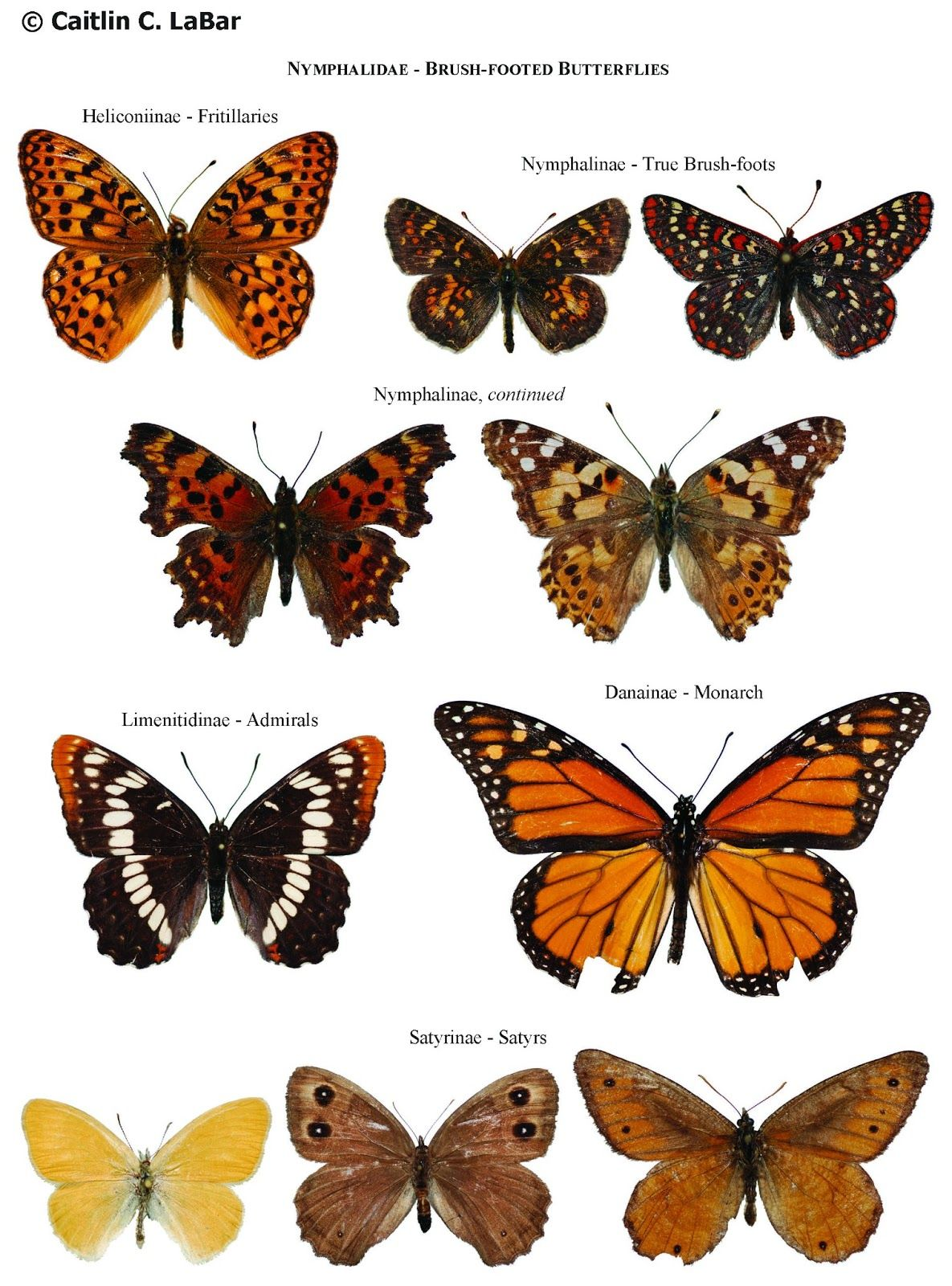 Northwest Butterflies Naming Lepidoptera Types of