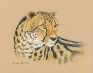 Colored Pencil Tutorial King Cheetah Colored Pencil Tutorial Big Cats Art Colored Pencils