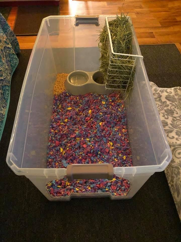 Diy hay litterbox combo hay box rabbit diet litter box