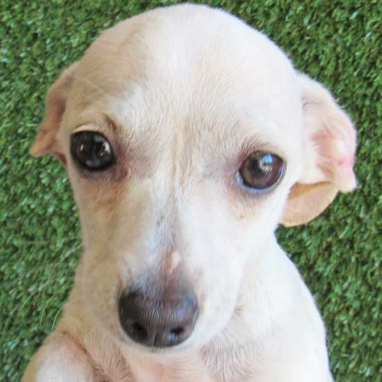 Adopt A Puppy Or Dog From San Diego County S Helen Woodward Animal Center Today Our Counselors Will Help You Choose The Best Canin Puppy Adoption Dogs Puppies
