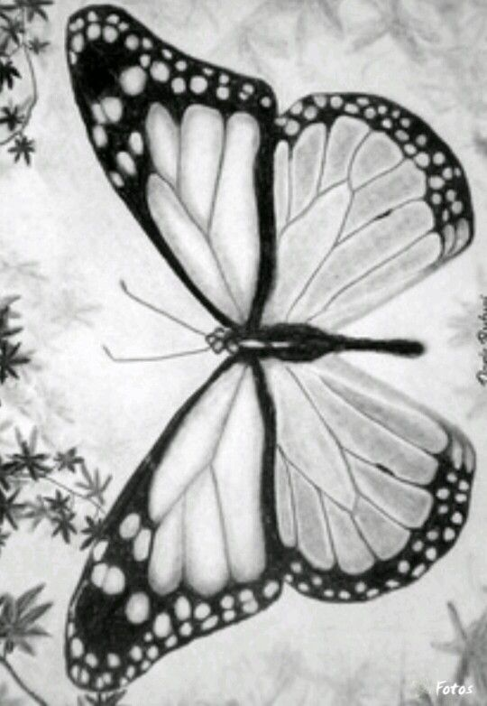 Butterfly Coloring pages colouring