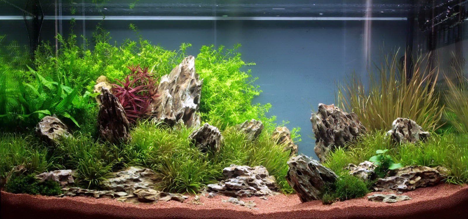 Aquascaping Planted Aquarium | aquascaping-planted ...