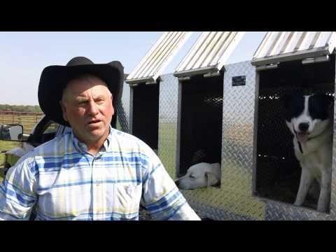 Training Cattle Dogs Youtube Dog Training Dog Training Tips