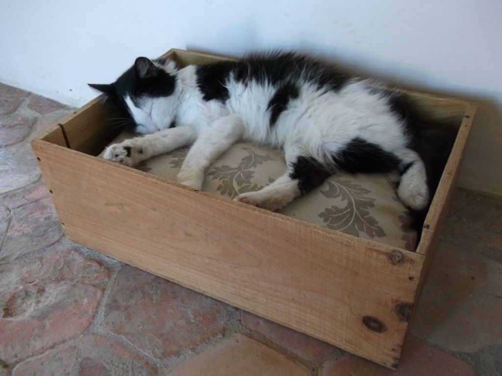 Wine Crate cat bed!