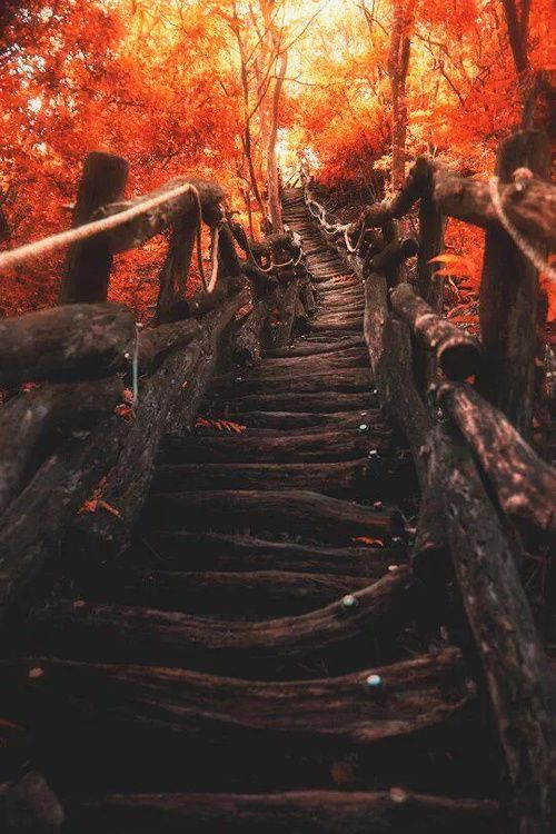 stairs in the fall foliage