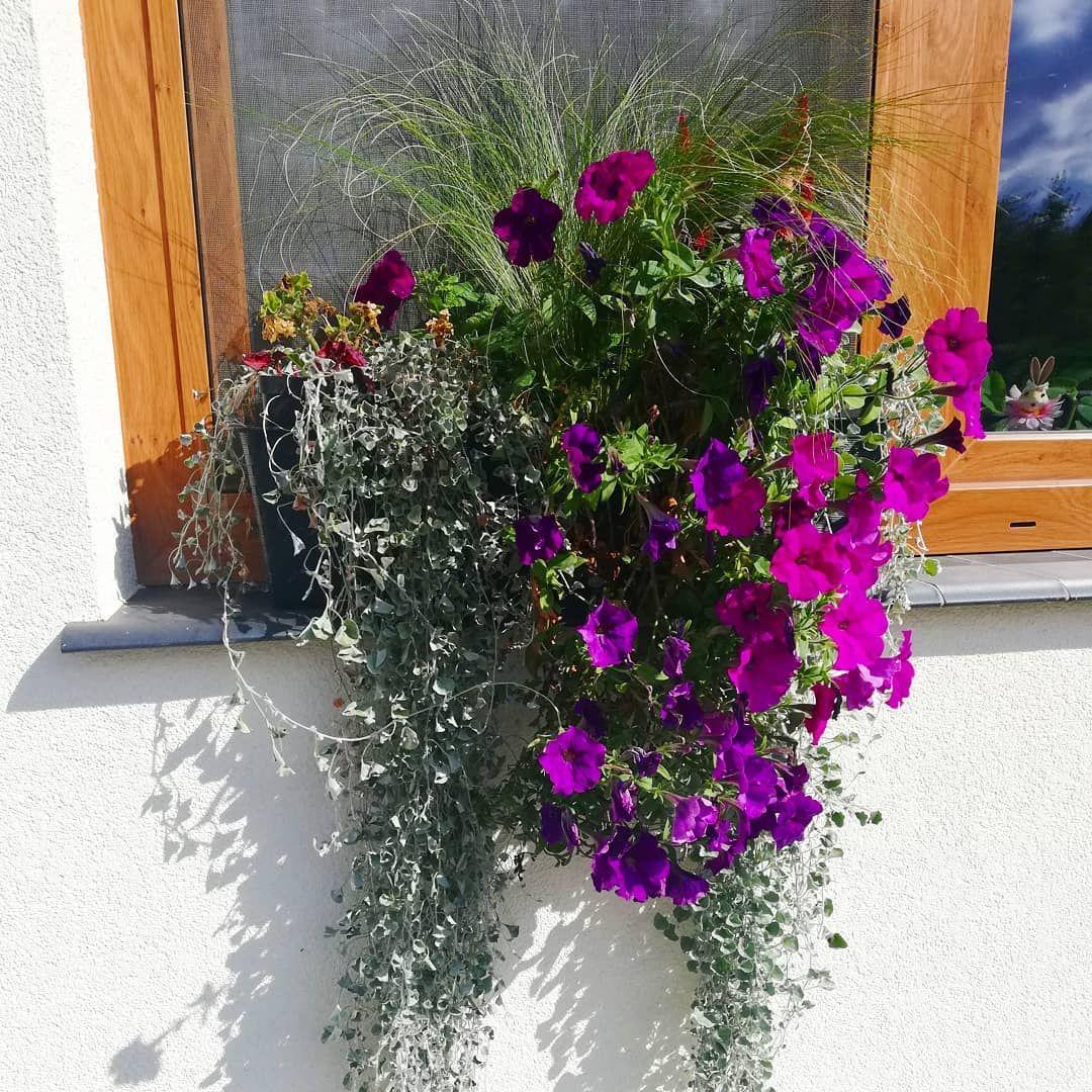Obraz Moze Zawierac Roslina Kwiat Drzewo Na Zewnatrz I Przyroda Plants