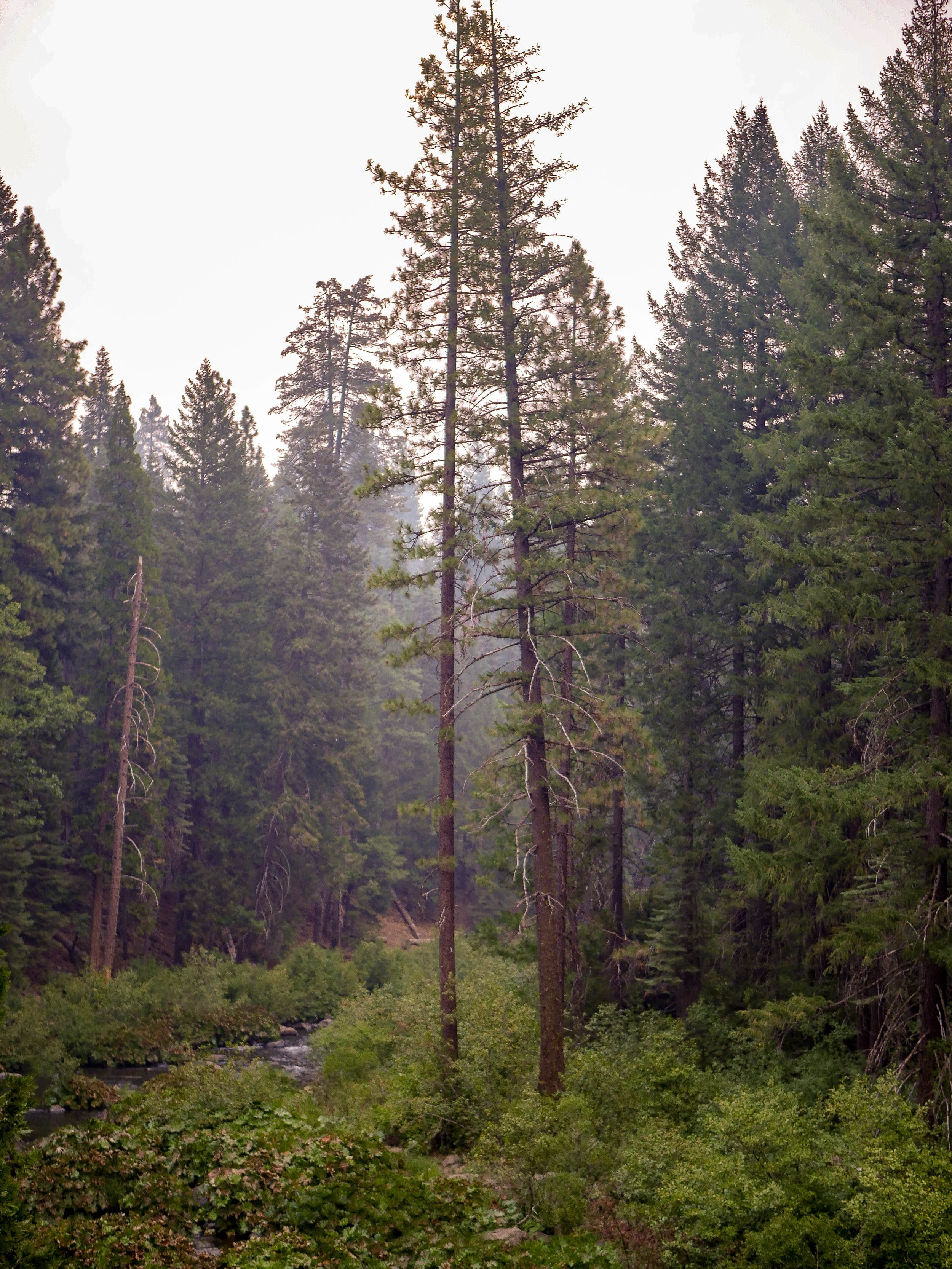 top 10 northern california places to visit   places to go