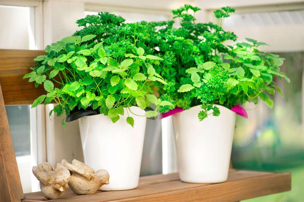 Hyötypuutarha ja puutarhahoito kiinnostavat suomalaisia. Puutarhaan halutaan nyt myös syötäviä kasveja: mansikoita, vihanneksia, juureksia ja perunaa.